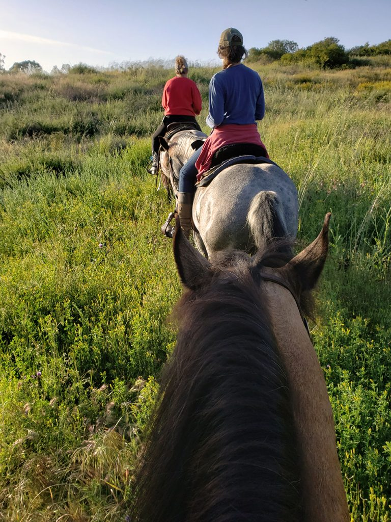 stepp stables group trail ride tall grass